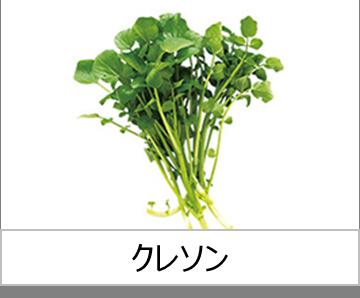 灯菜で育てられる野菜_クレソン