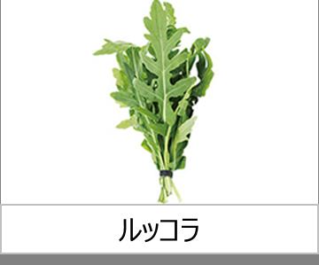 灯菜で育てられる野菜_ルッコラ