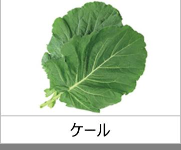灯菜で育てられる野菜_ケール