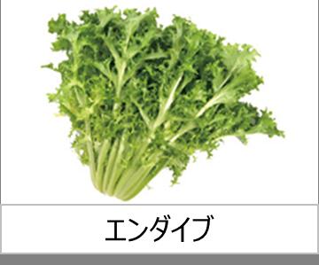 灯菜で育てられる野菜_エンダイブ