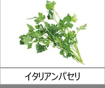灯菜で育てられる野菜_イタリアンパセリ
