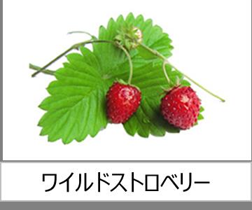 灯菜で育てられる野菜_ワイルドストロベリー