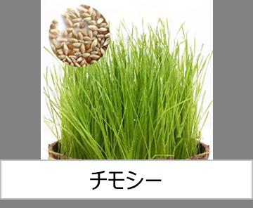 灯菜で育てられる野菜_チモシー