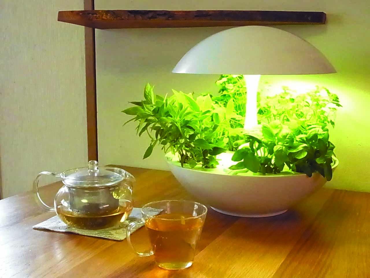 灯菜 LED植物水耕栽培器